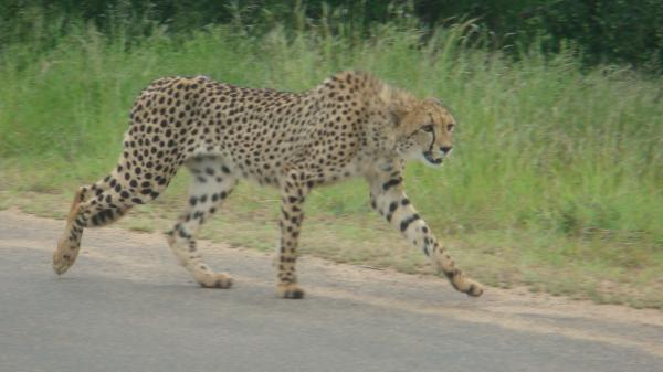 nature-and-game-drives-into-kruger-national-park